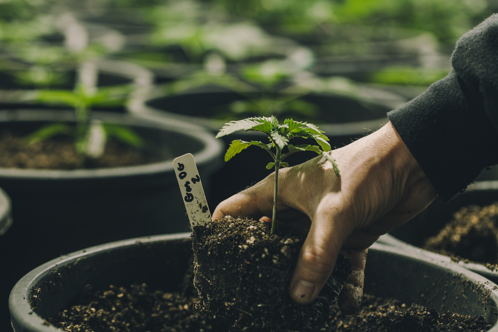 InSpire Transpiration Solutions to Host Cultivation Webinar Series