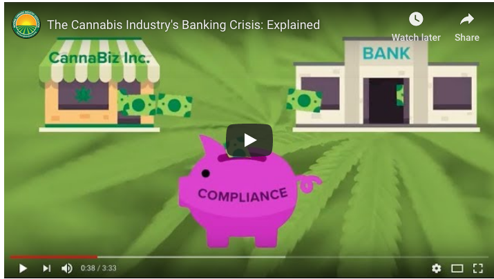 VIDEO: The Cannabis Industry's Banking Crisis – Explained