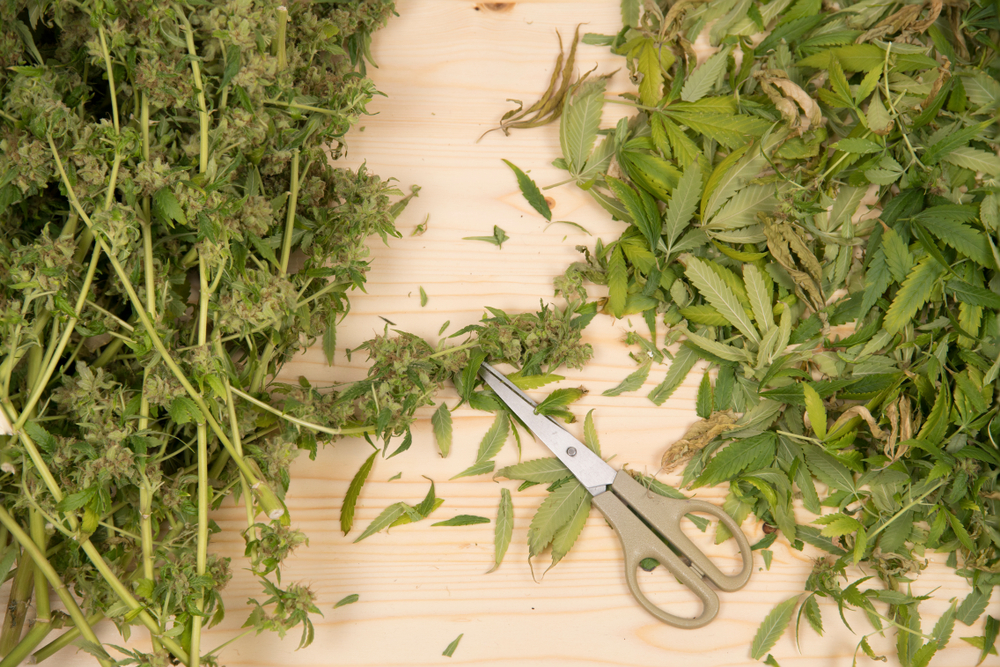 Allied Association Blog: Repetitive Motion Injuries and the Importance of Ergonomics in the Cannabis Industry